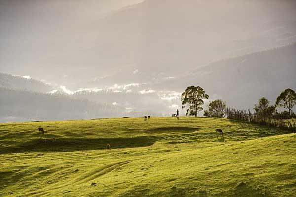 mountain-sunrise-and-cattle-5036.jpg